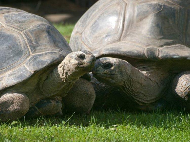 Биби и Полди докато бяха все още щастливо и дълбоко влюбени. Сн.: William Warby/Flickr