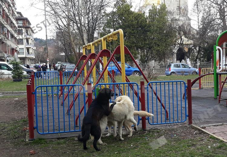 Преброяват бездомните кучета в цялата страна по общини