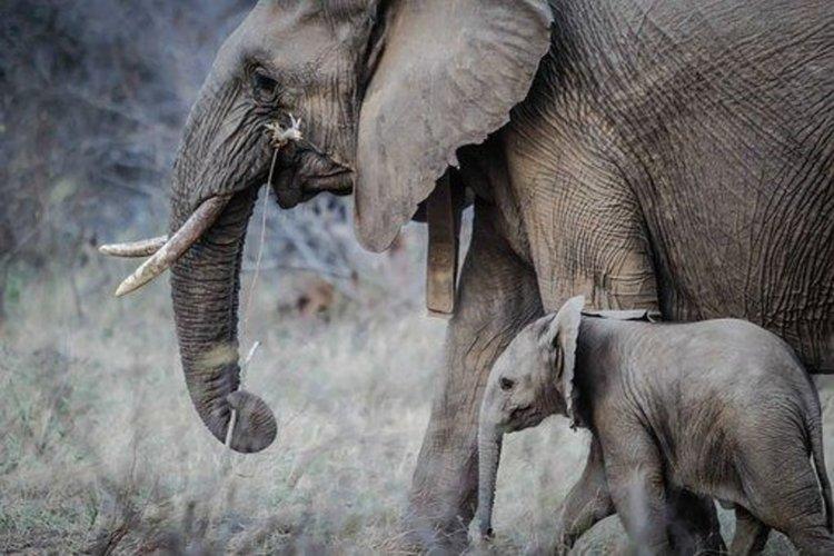 Познават ли животните бабите и дядовците си?