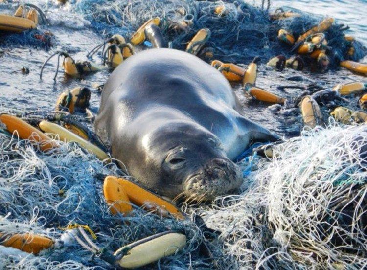 Удавени в пластмаса