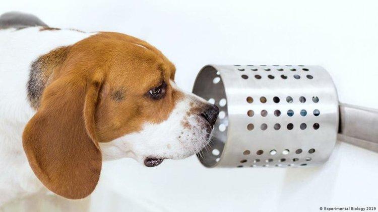 Кучетата могат да надушват рак - с 97% точност
