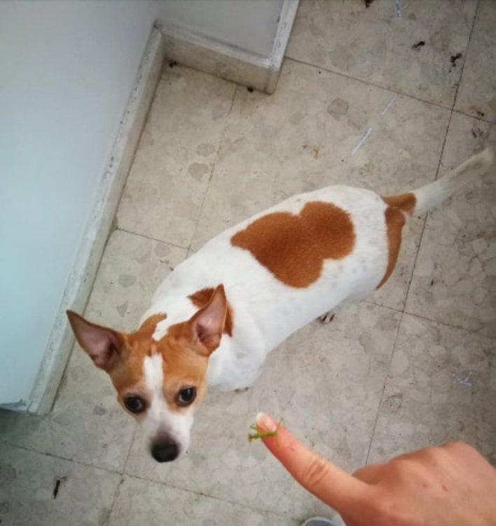 200 лева награда обявиха за изгубено куче