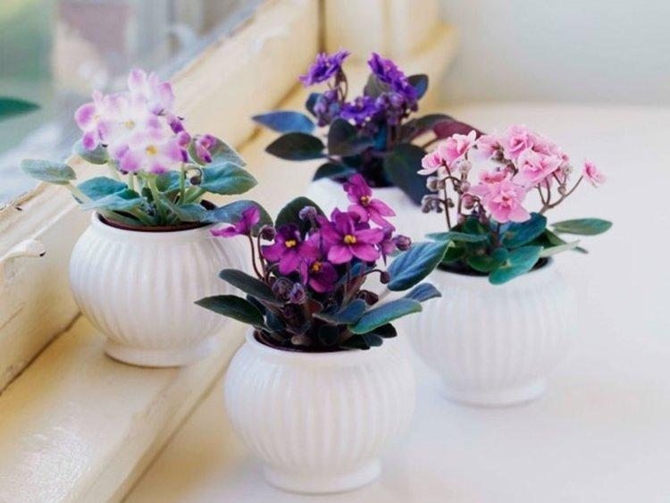 Цветята намаляват стреса, доказват учени