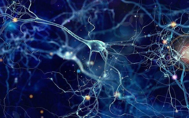 Нервната система може да предава съобщения към бъдещото поколение