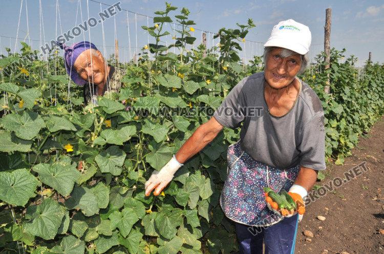 Търсят 80 земеделски работници и управители на комплекси в Хасково