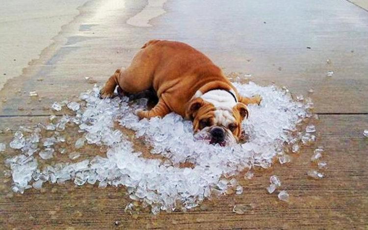 Иде адска жегa, 37°-38°през почивните дни