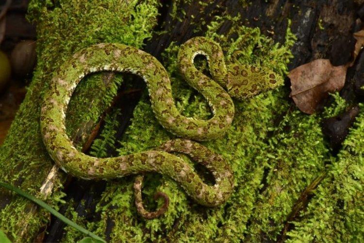 В митичен град в джунглата откриха редки и непознати създания