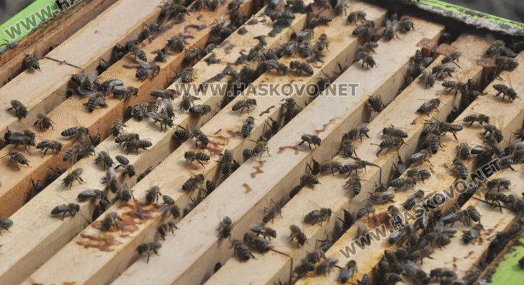 За първи път пчеларите с финансиране за подвижна паша