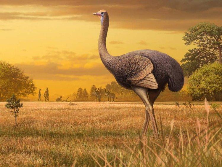 Откриха гигантска праисторическа птица в пещера в Крим