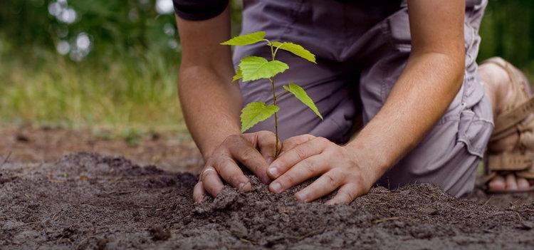 Да подкрепим възобновяване на Деня на залесяването в България и Димитровград