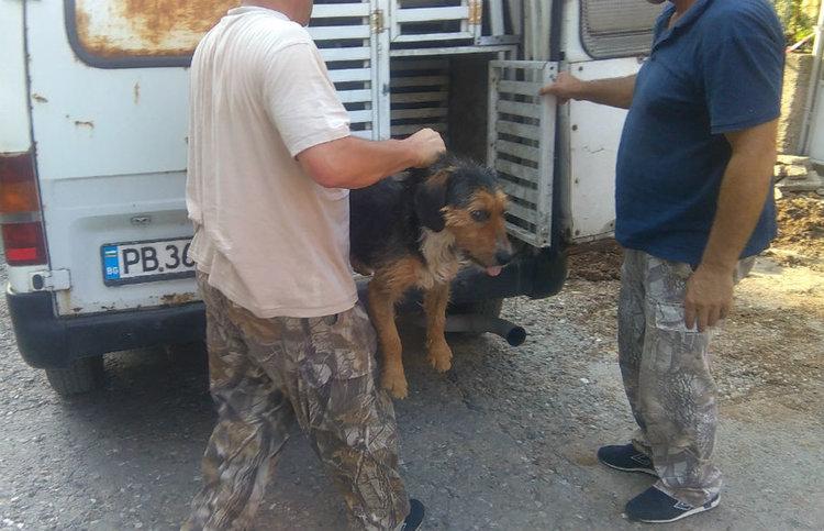 Кметът Караиванов разпореди спешна проверка на случая с ухапаното от куче дете