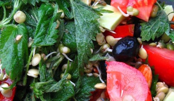 Салата с коприва, маслини и кълнове